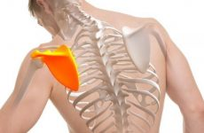 Біль у спині в області нижче лопаток: причини її появи праворуч і ліворуч, методи лікування патологій мануальною терапією