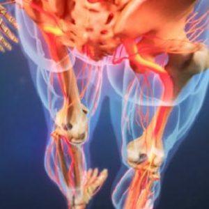 Дископатія хребта у людини: симптоми захворювання міжхребцевого диска і лікування за допомогою методів мануальної терапії