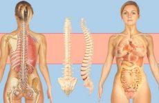 Дисплазія сполучної тканини суглобів: симптоми і лікування