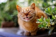 Як кішки виражають емоції і які саме