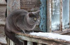 Кішка в домі: прикмети і забобони