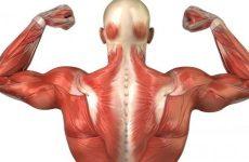 Захворювання з болями в м'язах спини: симптоми, причини і лікування за допомогою методів мануальної терапії