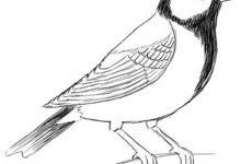 Розмальовка Пташка для дітей: завантажити та роздрукувати