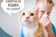 Алергія на кішок у дітей: симптоми і лікування