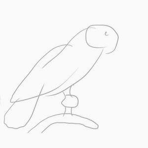 Як намалювати олівцем папугу