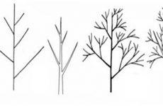Як намалювати дерево олівцем