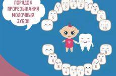 Порядок прорізування зубів у дітей: схема з фото