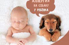 Алергія на собак у дитини: симпотмы і лікування
