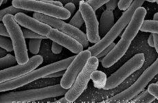 Бактерії, постійні супутники людини — вони скрізь і всюди