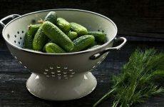 Чим корисні огірки для схуднення, смачні рецепти
