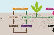 Калійні добрива ефективні для збільшення врожаю