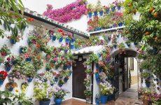 Кашпо для квітів, доповнюємо красу саду