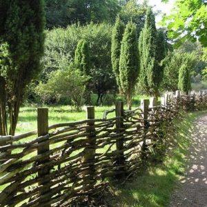Ялівець, особливості догляду при оформленні саду, дачної ділянки