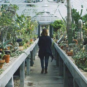Орхидейные кактуси — ботанічні раритети по всьому світу
