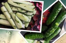 Малосольні огірки в пакет — швидкий рецепт з часником, кропом